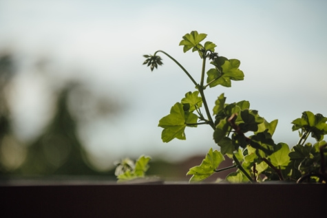 balcony, flowerpot, green leaf, shadow, leaves, branch, tree, flora, leaf, plant