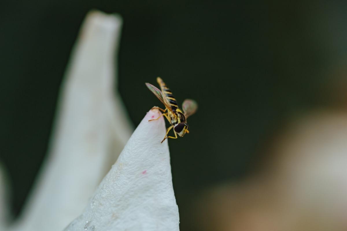 フライング, ワピー, 白い花, 節足動物, 無脊椎動物, 昆虫, 自然, アウトドア, 野生動物, 動物