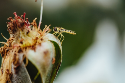 dry season, flower, focus, insect, natural habitat, seed, wasp, nature, herb, plant