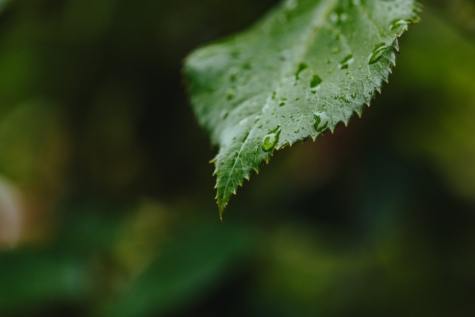 rainy season, waterdrop, wet, rain, nature, fern, leaf, tree, plant, blur