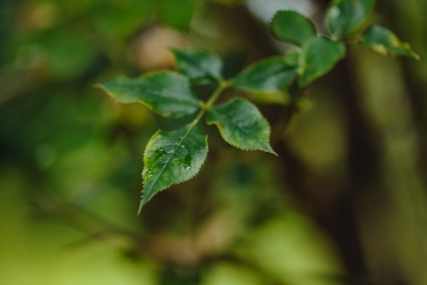 tree, plant, spring, leaf, leaves, blur, forest, nature, rain, outdoors
