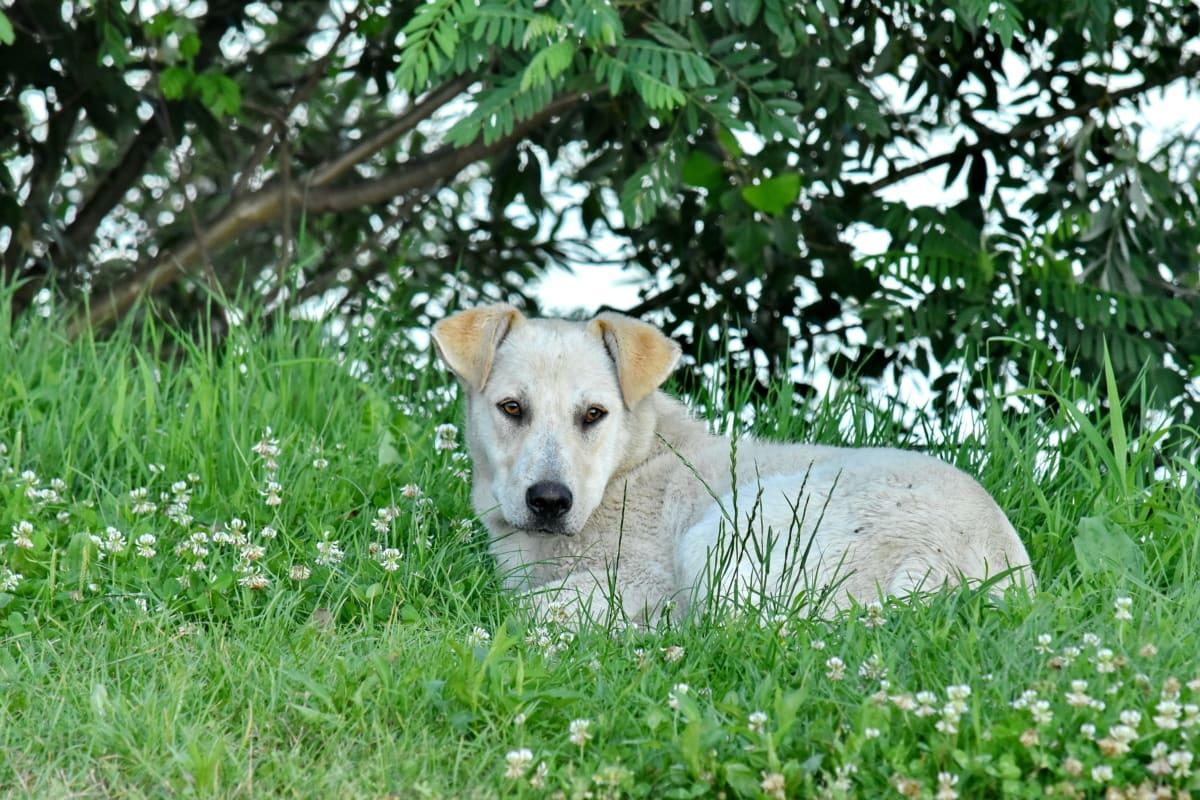 hermosa, perro, césped, colocación de, cachorro, mascota, canino, lindo, naturaleza, animal