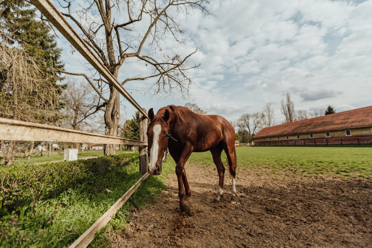 lahan pertanian, kuda, pacuan kuda, coklat, peternakan, pedesaan, desa, hewan, pertanian, kuda