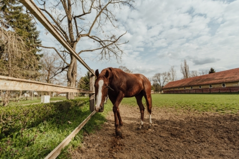 farmland, horse, horse racing, light brown, ranch, rural, village, animal, farm, horses