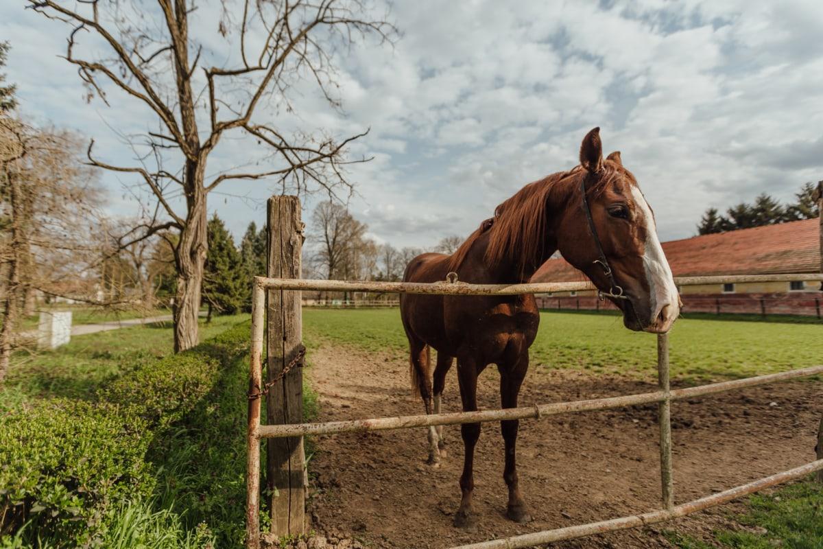 casa de campo, tierras de cultivo, caballo, ganado, Rancho, rural, aldea, caballos, granja, equinos