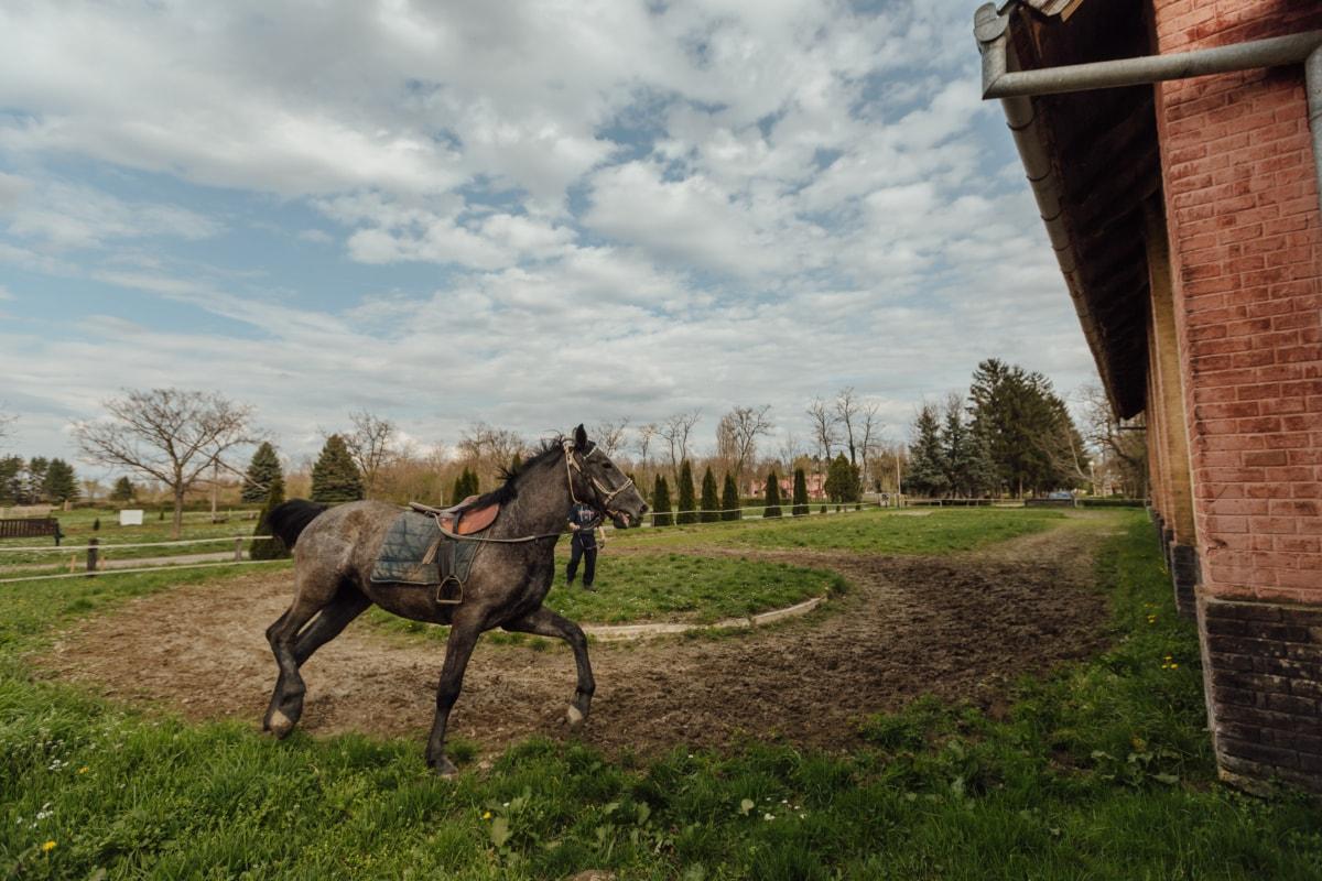 animal, horse racing, horseshoe, horsetail, race, sport, stallion, training, training program, horse