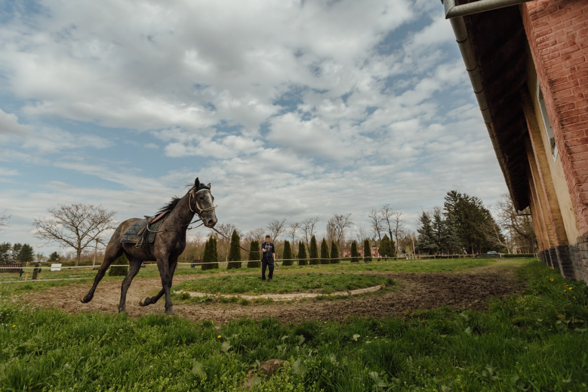 konj, ranč, trener, trening, program obuke, konji, farma, pastuh, životinja, trava