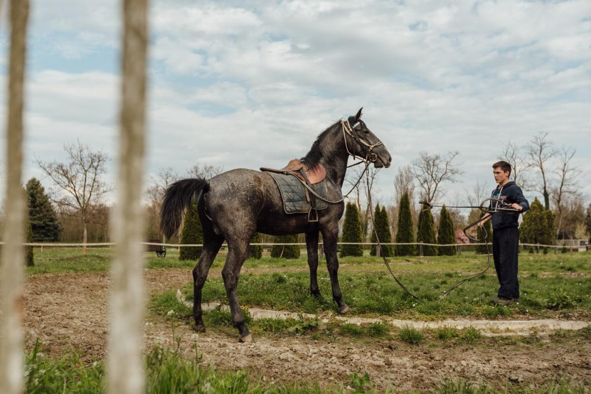 dječak, konj, utrke konja, konji, ranč, trening, program obuke, oklop, farma, pastuh