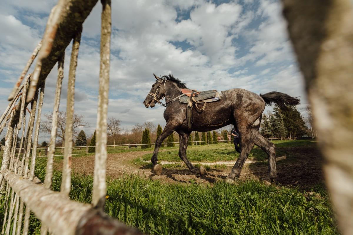 horse, horse racing, running, running track, sport, trainer, training program, stallion, horses, animal