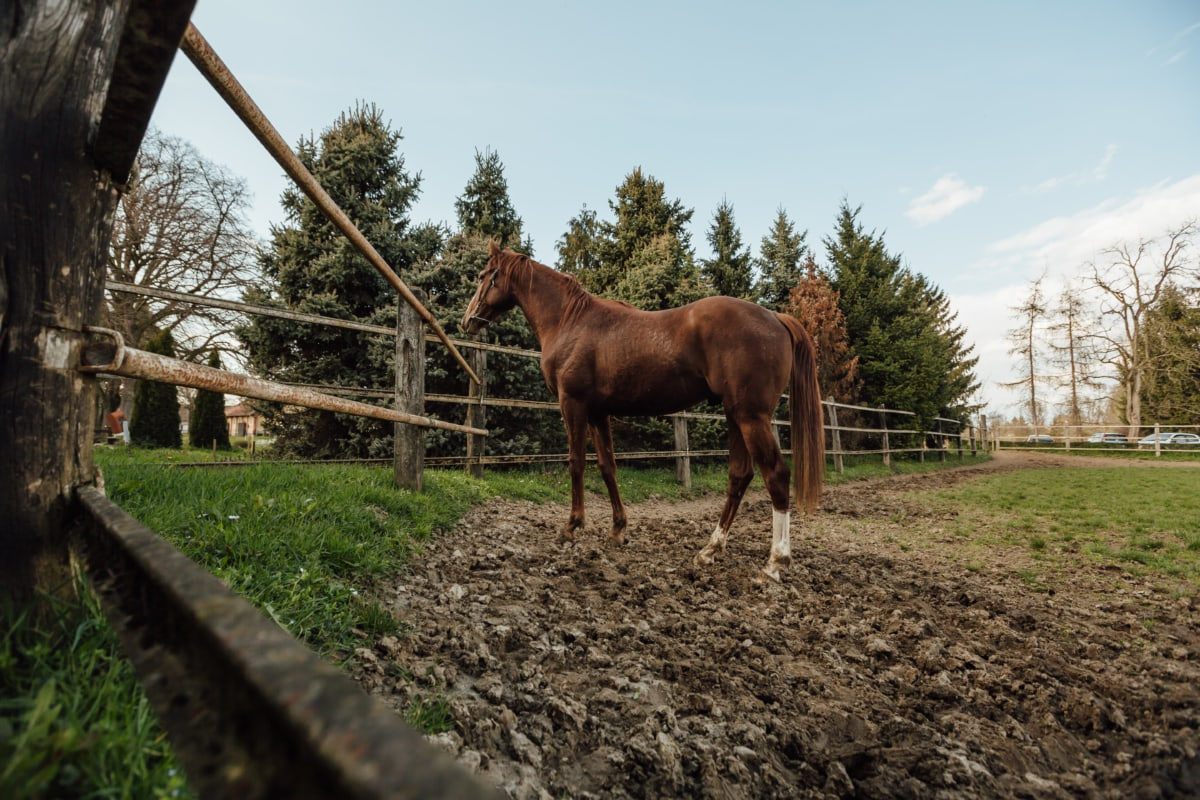 farmland, light brown, ranch, horse, equine, stallion, horses, rural, agriculture, farm