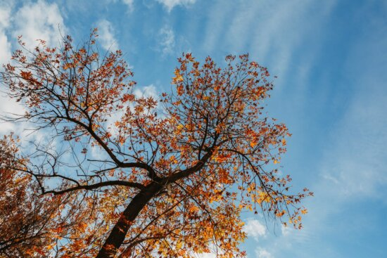 forest, tree, branch, nature, plant, leaf, bright, fair weather, outdoors, blue sky