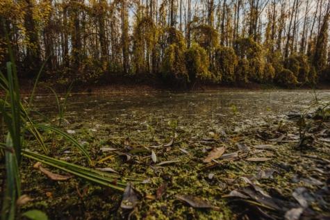 water, swamp, wetland, land, leaf, landscape, wood, tree, forest, nature
