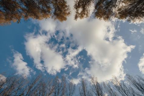bầu trời xanh, đám mây, cây, cây, cảnh quan, mùa đông, khí quyển, rừng, mùa giải, công viên