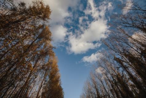 pohon, pohon, pemandangan, hutan, suasana, musim dingin, matahari, salju, taman, di luar rumah