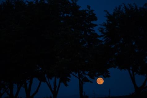 tengah malam, sinar bulan, malam, Nightshade, suhu, siluet, bulan, pohon, pemandangan, cahaya
