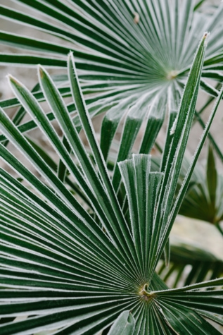 cold, exotic, frosty, green leaves, herb, tropical, yucca, nature, leaf, plant