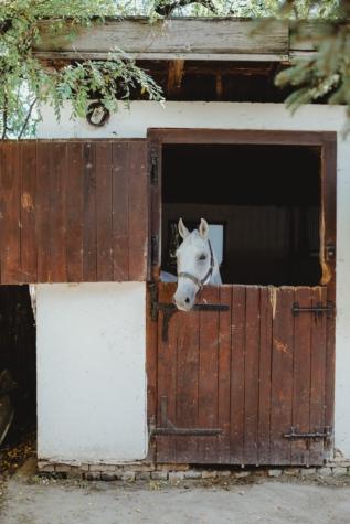 boerderij, landbouwgrond, voordeur, hoofd, paard, portret, boerderij, schuur, oude, hangslot