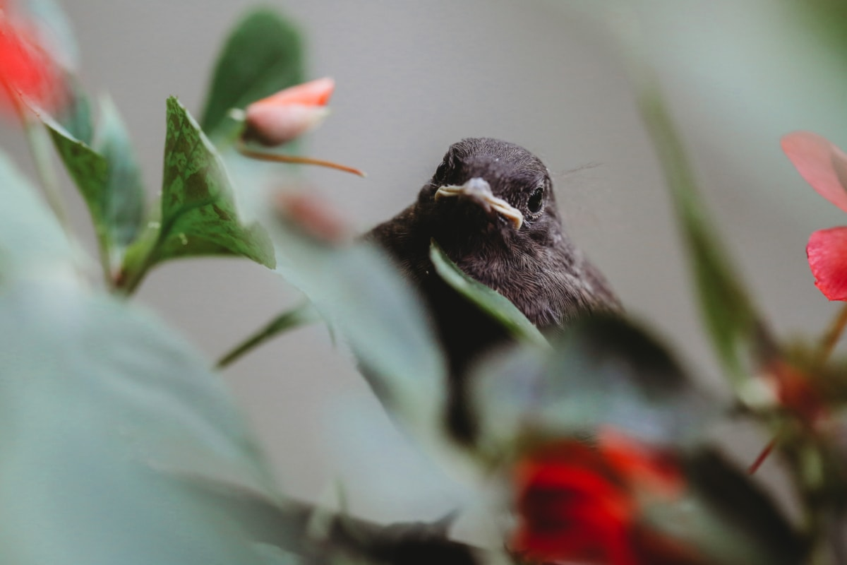 príroda, zviera, kvet, vták, voľne žijúcich živočíchov, krídlo, vonku, rozostrenie, letné, Záhrada