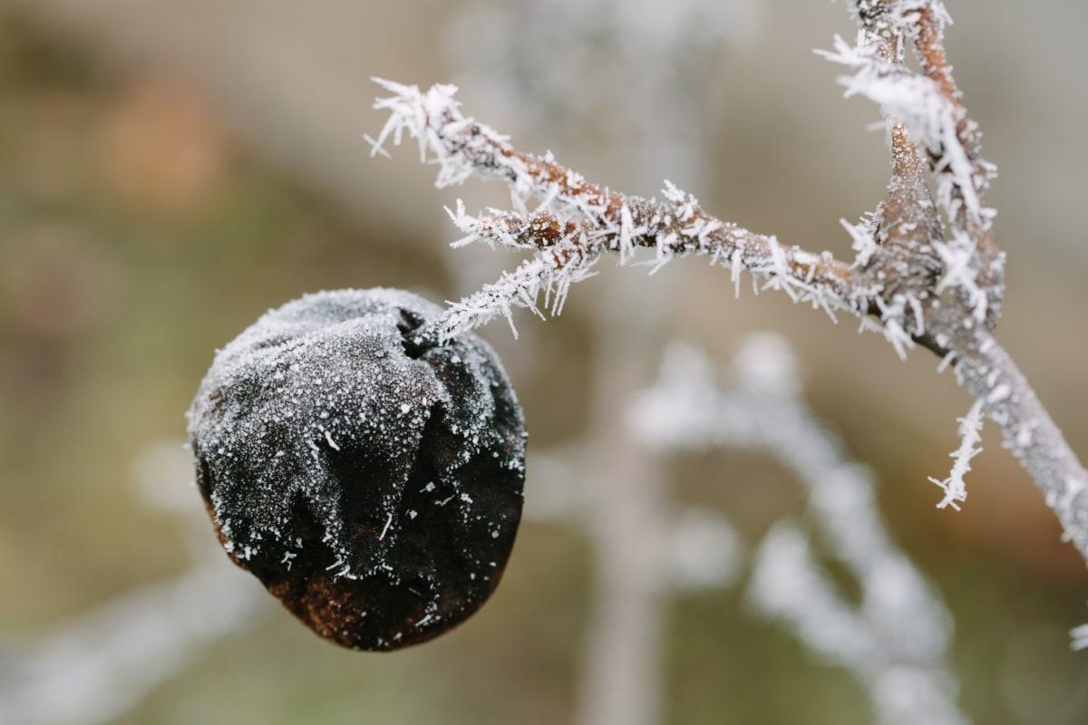 гілки, холодної, морозний, заморожені, взимку, сезон, фрукти, завод, дерево, відділення