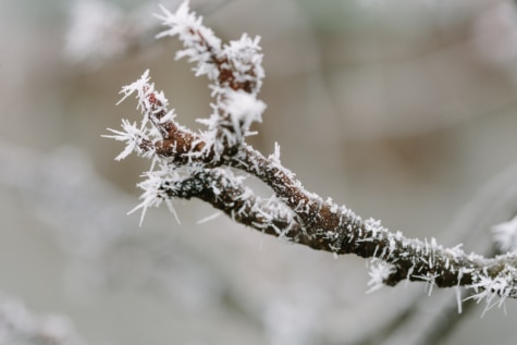 frost, snowflakes, twig, frozen, season, branch, nature, tree, winter, snow