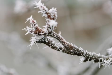 gel, flocons de neige, brindille, congelés, saison, branche, nature, arbre, Hiver, neige