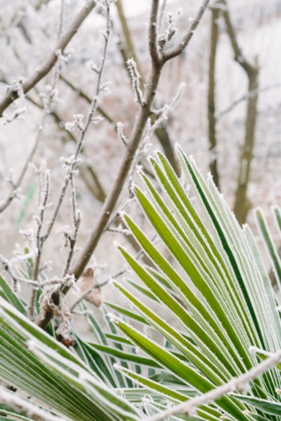 flora, nature, leaf, plant, outdoors, tree, grass, summer, branch, frost