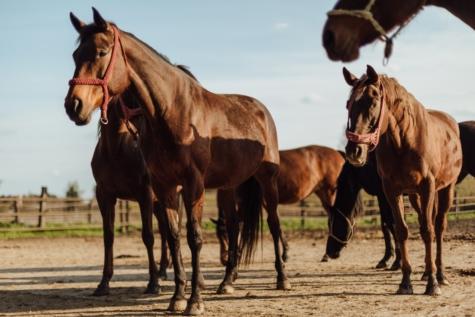농지, 가축, 목장, 말, 농장, 기병대, 종 마, 마 레, 말, 말