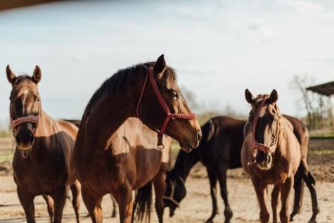 equine, horses, mustang, horse, farm, animal, stallion, livestock, pony, herder