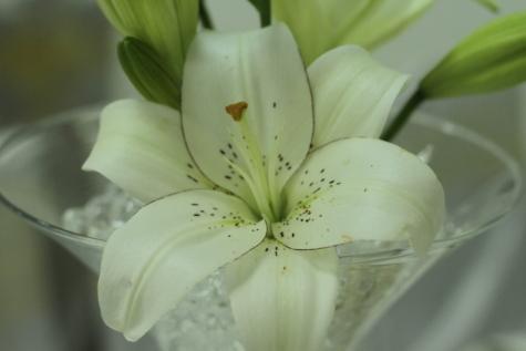 lilje, blomst, hvit, natur, blad, elegante, romantikk, flora, renhet, sommer