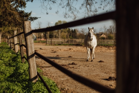 animal, fence, horse, ranch, white, equine, farm, mare, nature, rural