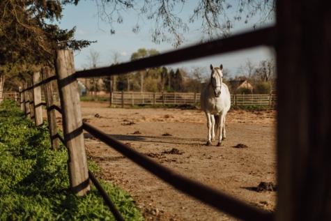 zviera, plot, kôň, ranč, biela, koní, farma, Mare, príroda, vidieka