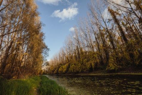 littoral, mauvaises herbes, zones humides, arbre, Saule, forêt, paysage, automne, arbres, marais