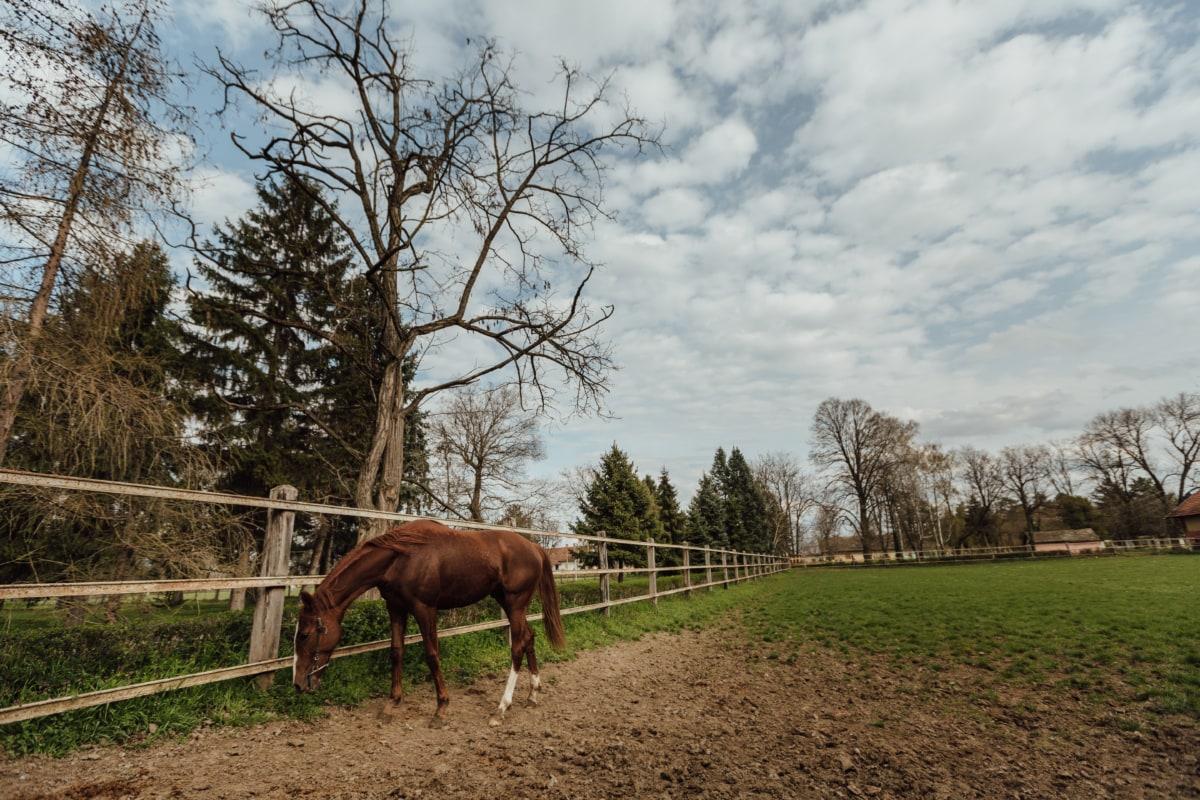 동물, 농지, 말, 밝은 갈색, 가축, 목장, 종 마, 마, 말, 농촌