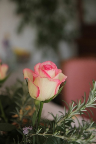 bouquet, rosemary, nature, flower, bloom, petal, blossom, pink, plant, rose