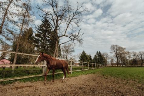 rancho, estância, rural, animal, cavalaria, cavalo, cavalos, fazenda, grama, égua