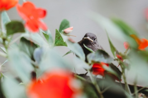 nature, leaf, bird, flower, plant, garden, summer, outdoors, flora, blur