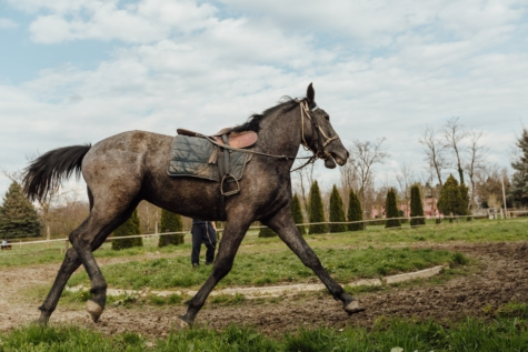 equipment, horse, horse racing, horseshoe, running, running track, side view, sport, stallion, animal