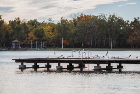 ฮาร์เบอร์, ทะเลสาบ, นกนางนวล, น้ำ, แม่น้ำ, สวน, สะพาน, ต้นไม้, ท่าเรือ, หนาว