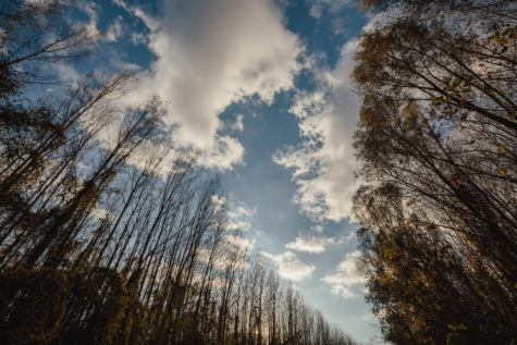 atmosphere, blue sky, tree, landscape, trees, nature, wood, forest, dawn, fair weather