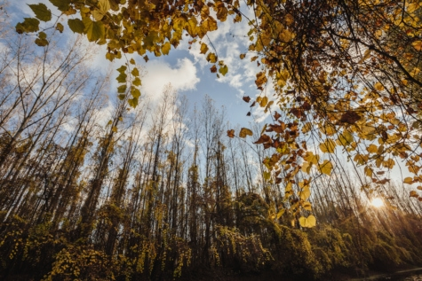season, nature, autumn, wood, leaf, forest, tree, trees, plant, landscape