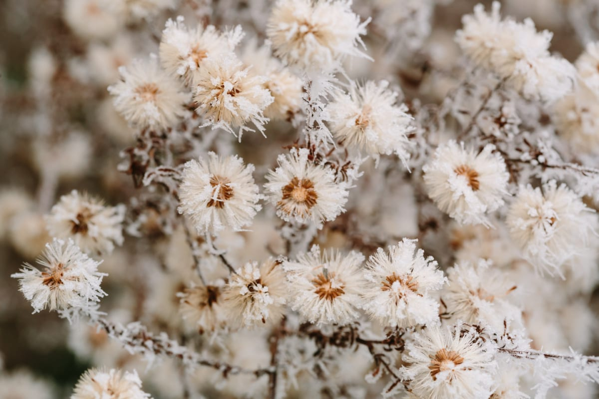 frio, detalhes, gelado, arbusto, flocos de neve, planta, erva, flora, flor, natureza