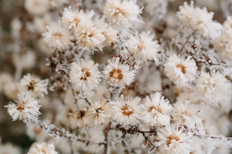cold, details, frosty, shrub, snowflakes, plant, herb, flora, flower, nature