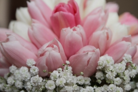bouquet, pinkish, tulips, pink, petal, flower, flowers, spring, blossom, plant