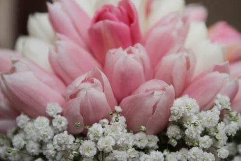 buquê, rosado, tulipas, rosa, pétala, flor, flores, primavera, flor, planta