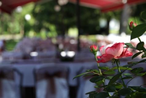 dining area, garden, restaurant, roses, petal, flower, plant, rose, bud, blossom