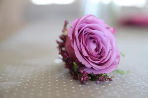 sisustus, punertava, nousi, yhden, Rakkaus, terälehti, kimppu, kukka, ruusut, vaaleanpunainen