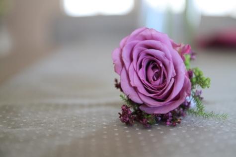 färger, dekoration, pastell, lila, ökade, kronblad, rosor, arrangemang, blomma, rosa