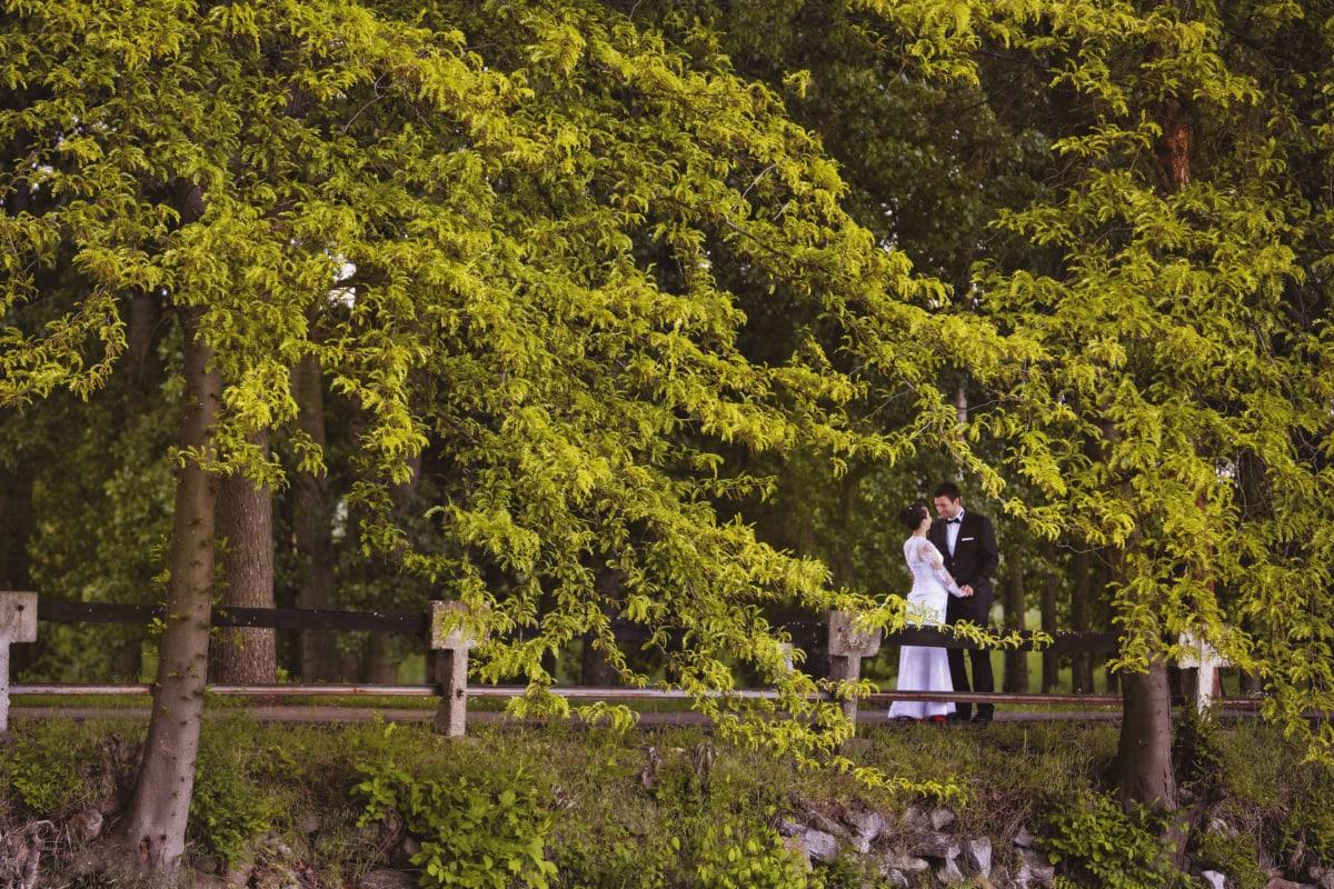 新娘, 时尚, 森林路, 新郎, 人, 漂亮女孩, 浪漫, 春季时间, 风格, 公园
