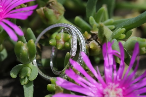 gold, platinum, rings, wedding ring, nature, flora, flower, cactus, garden, leaf