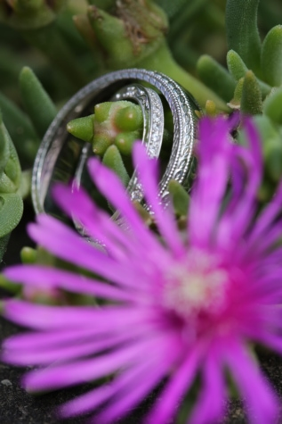 cactus, details, flower, green leaves, macro, object, photography, wedding, wedding ring, herb